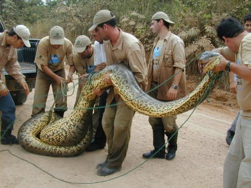 What a snake !!! - Giant snake