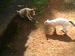 My Pet Animals - These are my pet animals; Dog and Cat How happily they are playing..!