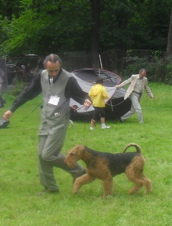 Airedale - At CACIB Sibu 2011