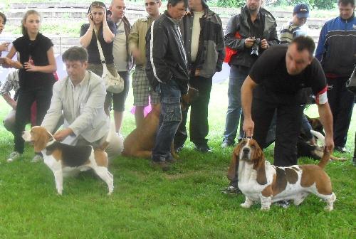 Beagle and Basset Hound - At CACIB Sibu 2011