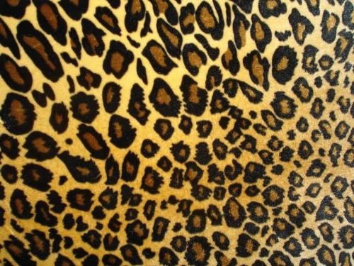 leopard print picture - leopard print picture, leopard print design