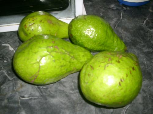 Avocados - A picture of avocados from my tree in the backyard!
