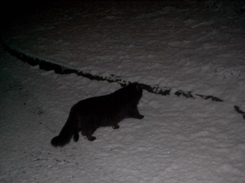 The Cool Cat - My cat exploring in the snow..