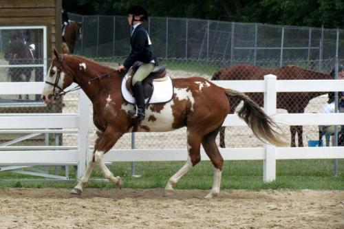 What is wrong with this picture? - I can tell the rider's butt doesn't have her butt in the saddle. She needs to relax and learn to move with her horse!