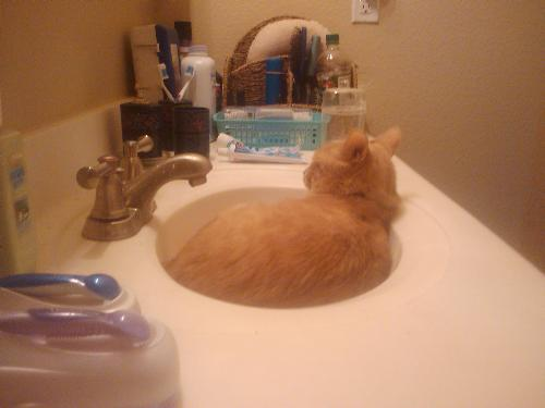 Cat in sink. - A few months ago, my partner, George and I moved from our apartment in South Daytona to the one we're living in now. During the moving process one of our cats took an interest in the sink curling up in it like it was a cat bed. What makes this picture cute and funny, is this cat is moridified when it comes to anything resembeling water. You couldn't get him anywhere near the stuff (except to drink) yet, I found him curled in the bathroom sink of our 'old' place, and I just had to take a picture. It was too cute not to share. It just took me forever to post it.