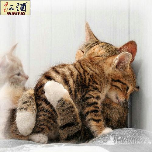 cat - lovely cat