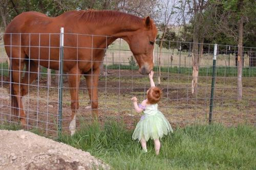Friends - This little girl made friends with the new horse! Aww!