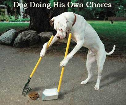 dog doing his own chore - The obvious and fair solution to the housework problem is to let men do the housework for, say, the next six thousand years, to even things up. The trouble is that men, over the years, have developed an inflated notion of the importance of everything they do, so that before long they would turn housework into just as much of a charade as business is now. They would hire secretaries and buy computers and fly off to housework conferences in Bermuda, but they'd never clean anything. ~ Dave Barry