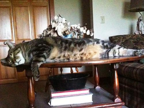 Laying around - This cat sure looks relaxed and comfortable on this table!