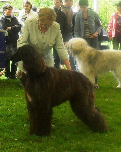 Afgan Hound - at CACIB Sibiu 2011