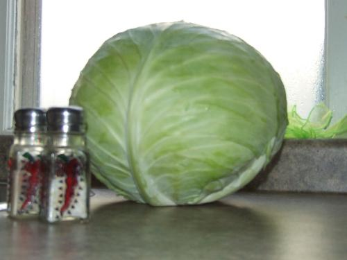 Cabbage - Cabbage for cabbage rolls