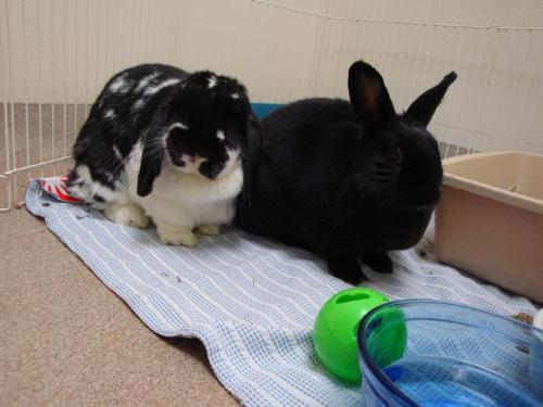 Rabbits - Two Rabbits waiting for a new home! So cute!