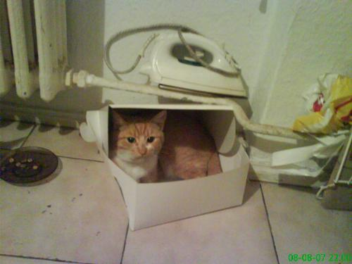 Maya in the box - She like to hide in weird places.