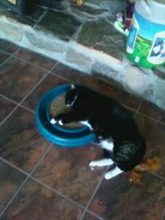 Mawmaw and her catnip - I think the catnip got her!