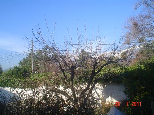A picture of the Andes from my door. - This picture was taken from my doorstep. The tree is an apricot. My jams are wonderful.
