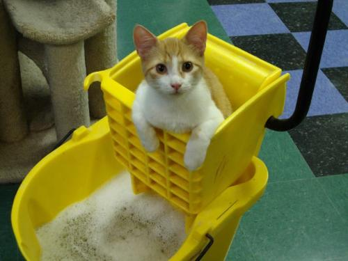 What a cutie! - This little guy like to help clean!