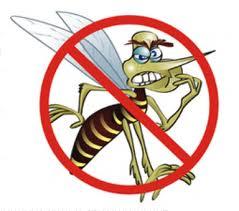 dengue - fever from mosquitos