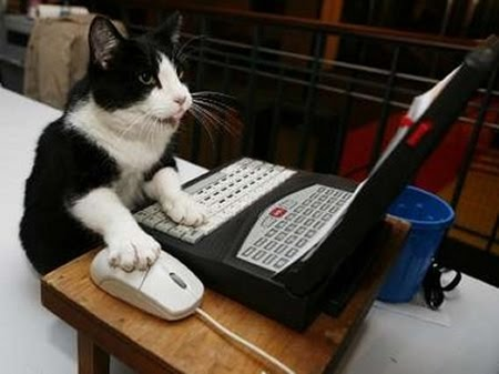 Cat Using Computer - Cats and computers