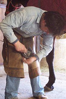 farrier - A farrier put a shoe on a horse.