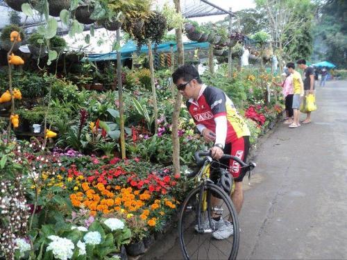 Tagaytay - Flowers along Tagaytay road