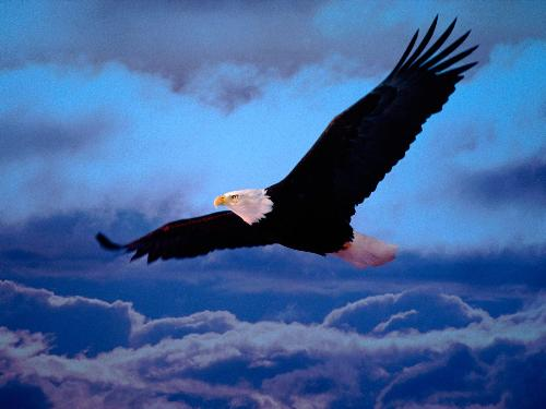 eagle  - My dream is to fly in the sky and feel free like a eagle.