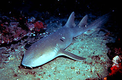 Nurse Shark - These sharks usually don't bite unless provacted.