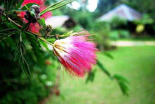 flower - flower effect with gondola background