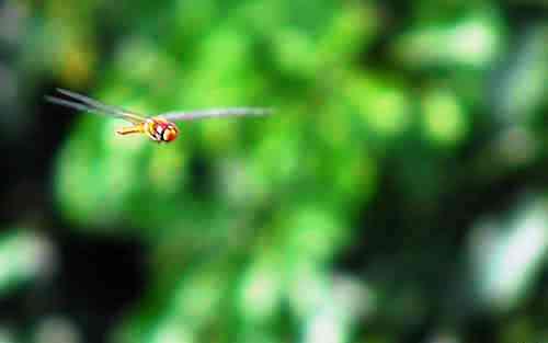 dragonfly - is it a dragon or is it a fly? it's a dragon fly.