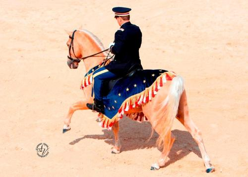 Memorial Day - The palamino Tennessee Walker,Ivory Pal, and his owner paying tribute to the falling ones we salute on Memorial Day.