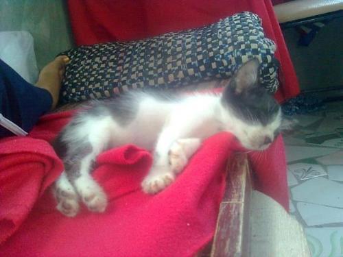 Hanging Head - Why do cats like to sleep like that?