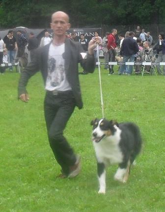 Australian Shepherd - at CACIB Sibiu 2011