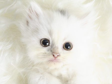 kittens - kittens are angels. they look innocent and should be cared for and loved.