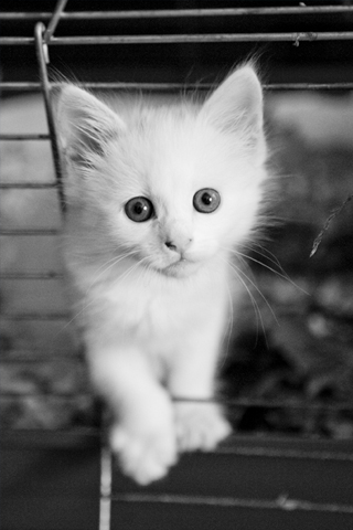kittens - kittens are angels. they should be cared for and loved