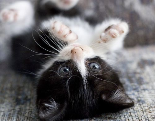 kittens - kittens are angels. they should be cared for and loved.