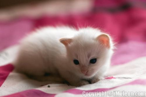 kittens - kittens are angels, they should be cared for and loved.