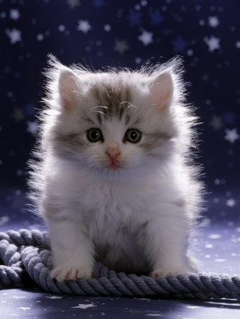 kittens - kittens are angels, they should be cared for and loved