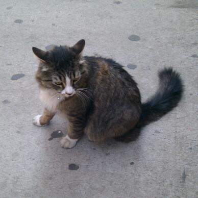Cat - Pet Cat