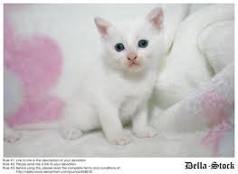 kittrens - kittens are angels, they should be cared for and loved