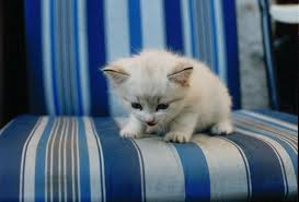 kittens - kittens are angels, they should be loved and cared for.