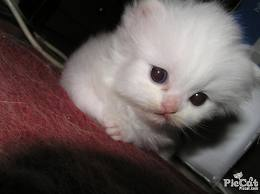 kittens - kittens are angels and supposed to be loved and cared fro.