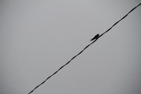 Small bird - Small bird in Finland