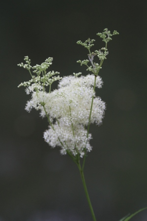 White flower - White flowers