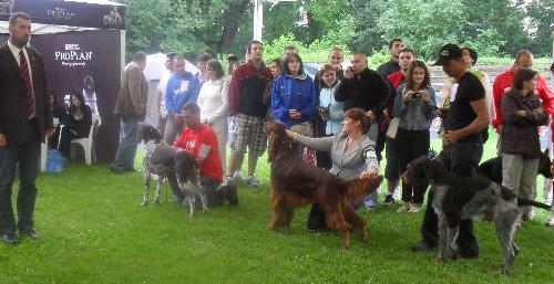 Dog show judging - at CACIB Sibiu 2011