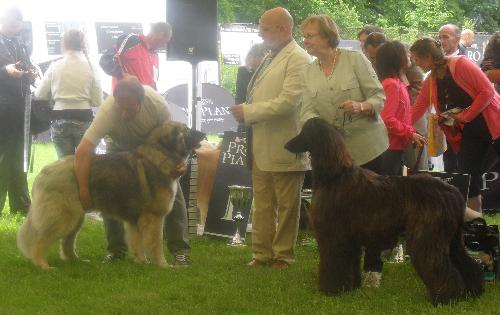 Dog show judging - at CACIB Sibiu 2011