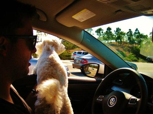 Enjoying Pet Dog - Traveling with Pet