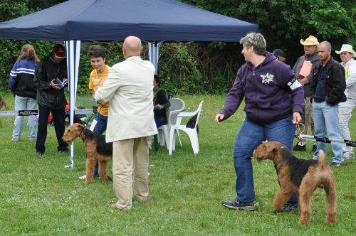 Airedale Terrier - at CACIB Sibiu 2011