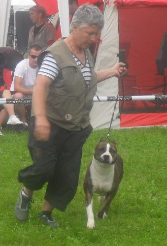 American Staffordshire Terrier - at CACIB Sibiu 2011