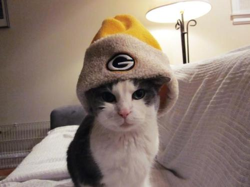Packer Fan - This cat is a Packer Fan! LOL!
