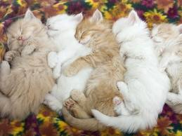 Group Hug - I thought this was the cutest picture of cats sleeping together. Just had to put it up hope everyone that loves cats enjoys!