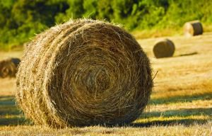 Hay - A round bale of hay.
